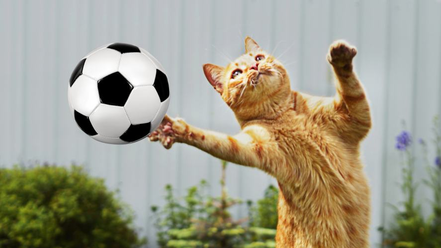 A cat playing football