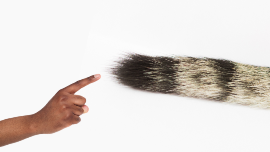 A cat's tail