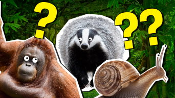 What Is Your Inner Animal Quiz?