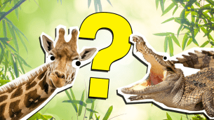 The Most Epic Animal Picture Quiz