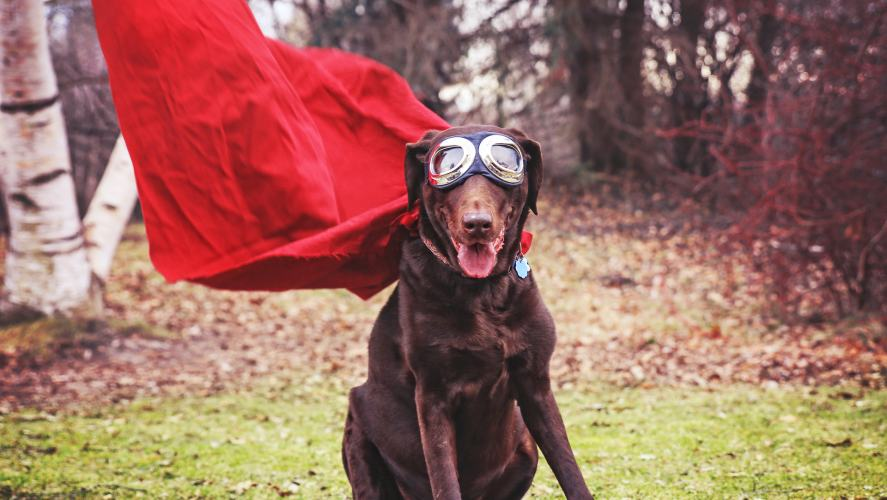 A brown dog in a cape and goggles
