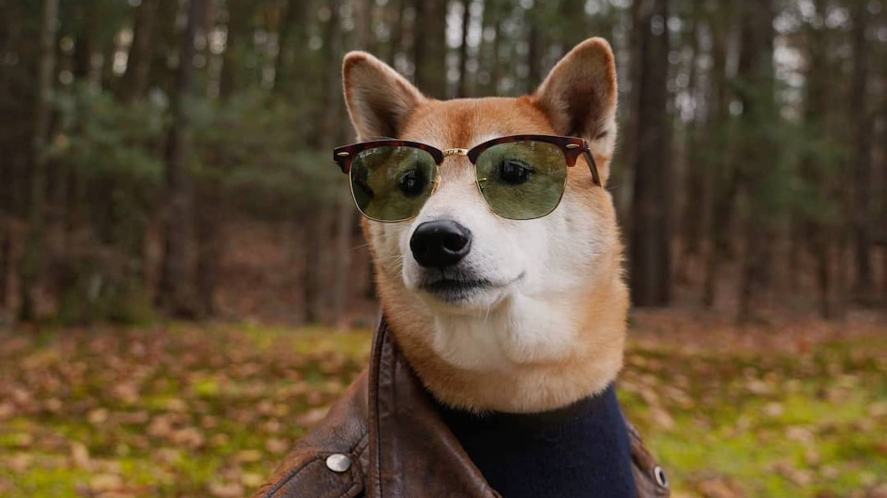 A very stylish dog