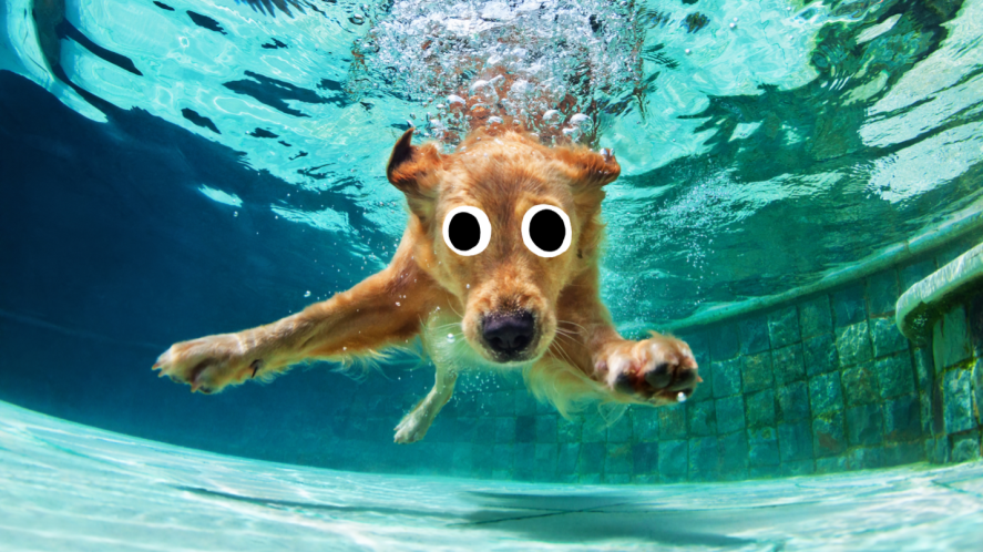 A swimming pooch