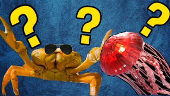 Sea Creature Thumbnail