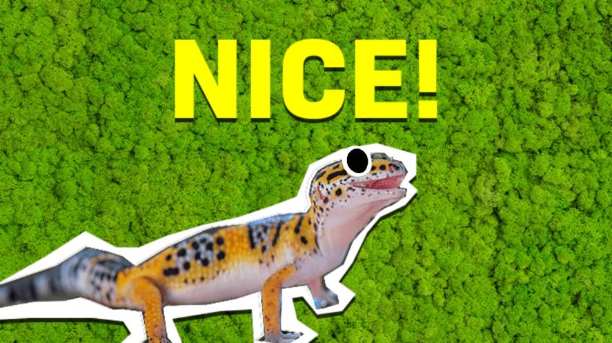Gecko and the word 'nice'