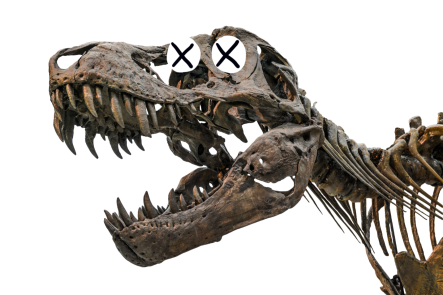 Dinosuar skeleton