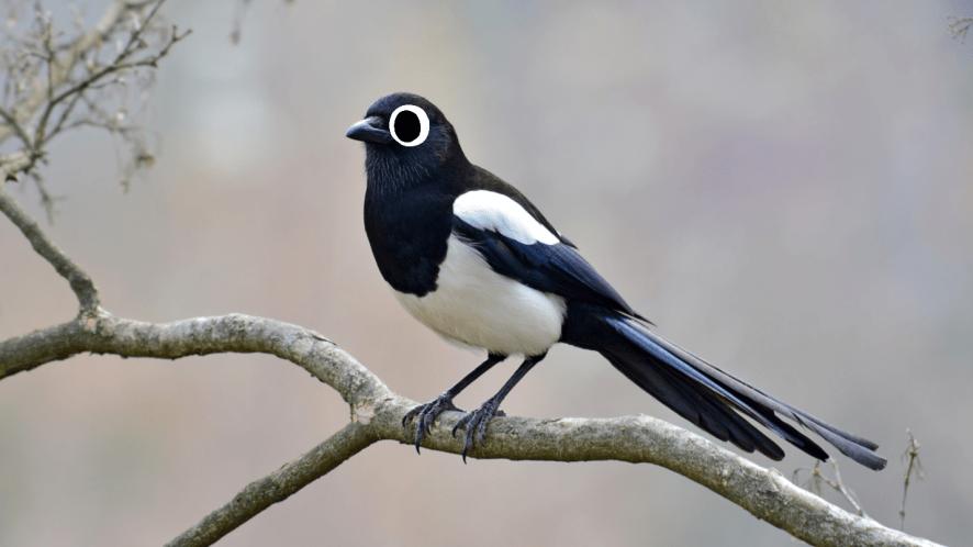 A black and white bird