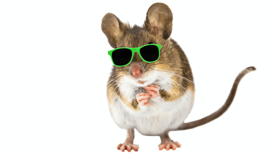 A baby mouse wearing sunglasses
