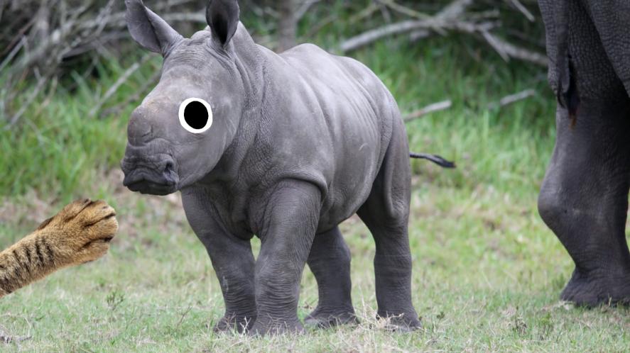 A baby rhinoceros