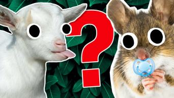 Baby animal name quiz