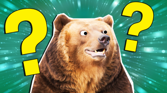 The Ultimate Famous Bears Quiz