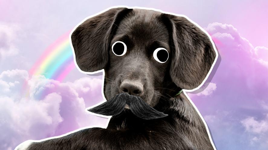 Sirius Black as a dog