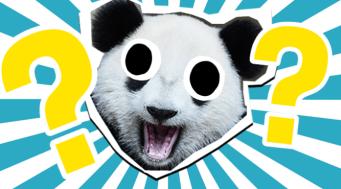 Panda quiz thumbnail