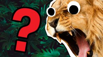 Lion Quiz Thumbnail