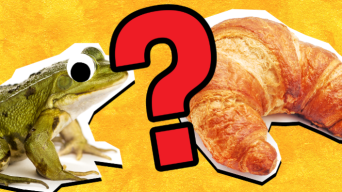 French food quiz