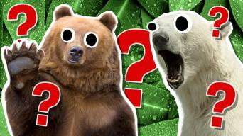 The Ultimate Bear Quiz