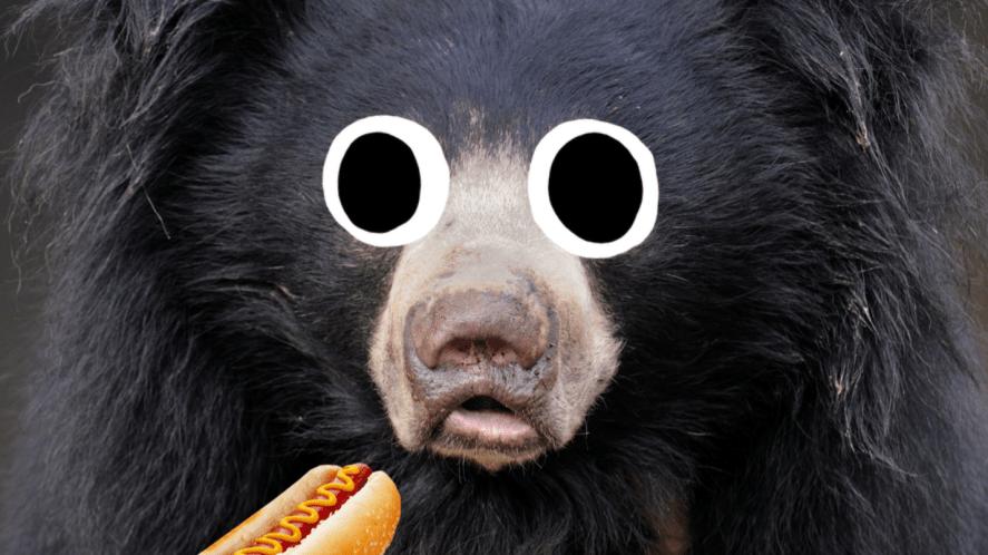 A sloth bear eating a hot dog