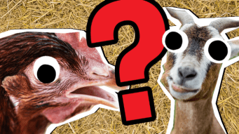Farm Animal Quiz Thumbnail