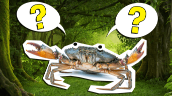 The Ultimate Food Chain Quiz