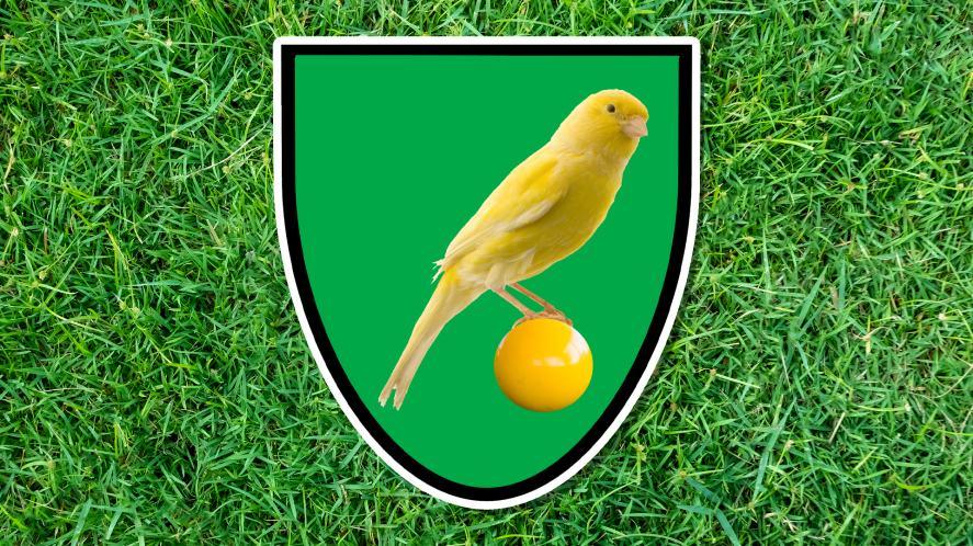 A yellow bird sits on a ball