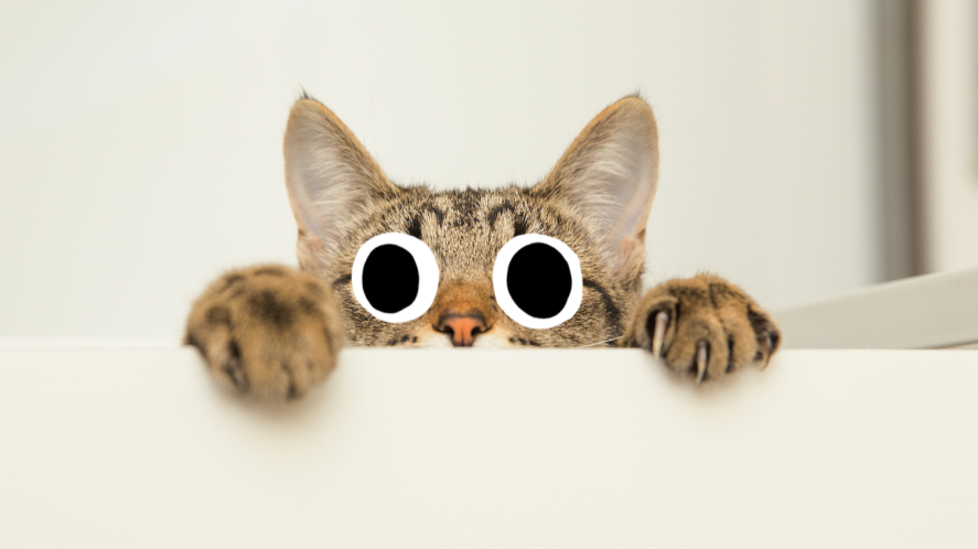 A cat looking at your quiz