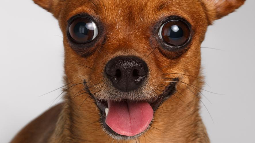 A very alert dog