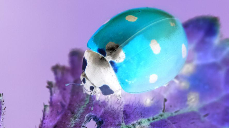 A ladybird
