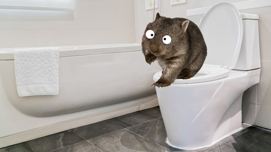 A wombat using the toilet