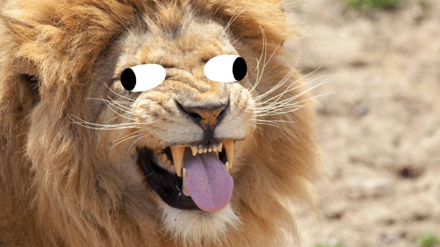 A lion having fun