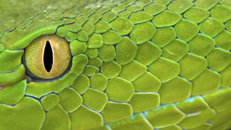 A snake's eye
