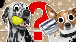 Epic dog pic quiz