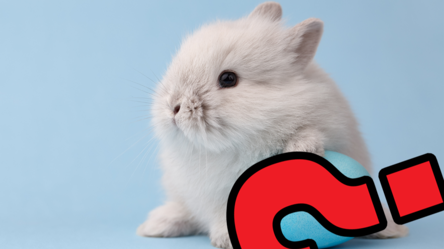 Easter Bunny with question mark