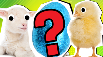 Easter Picture Quiz Thumbnail