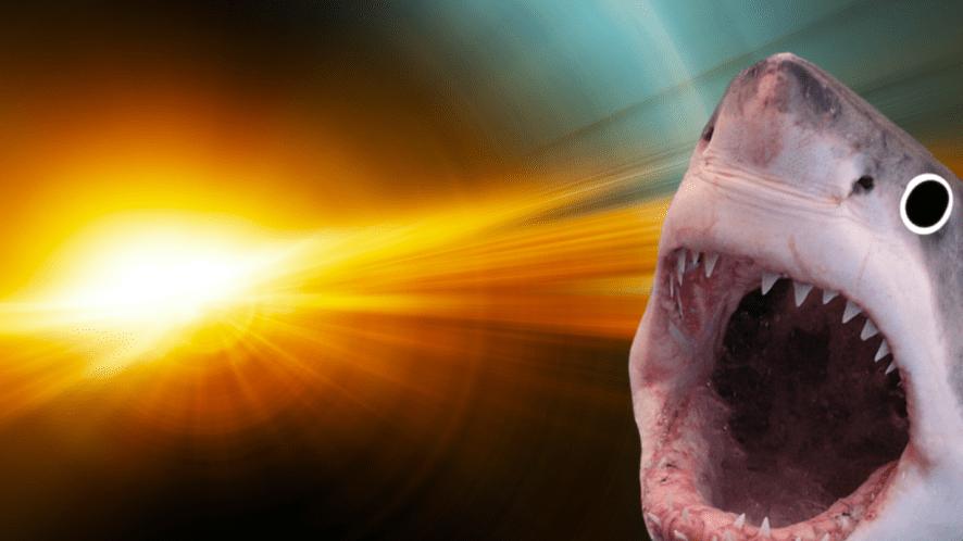 A shark in the sunshine