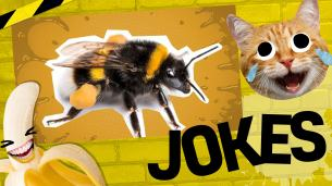 Funny bee jokes: a bee on a yellow background