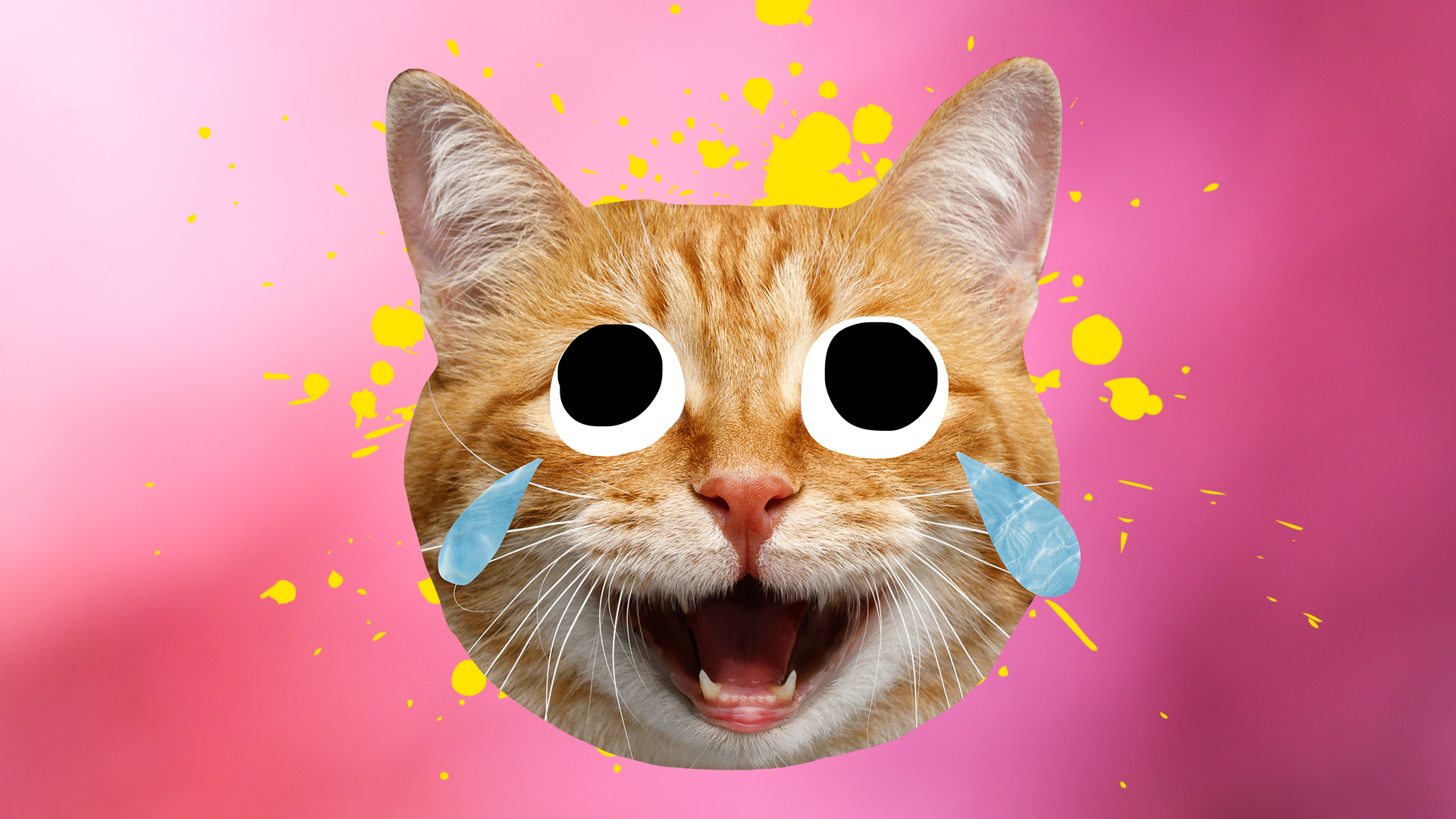 A laughing ginger cat