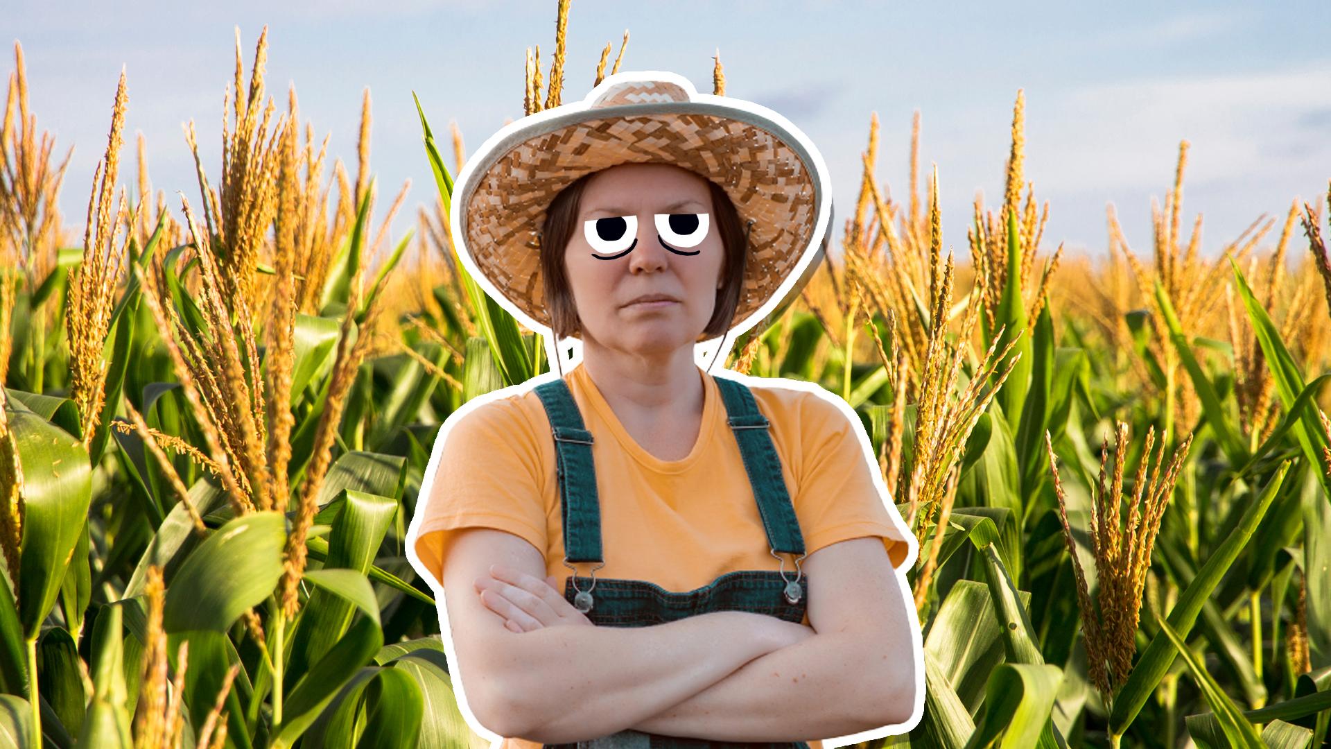 A farmer in a corn field