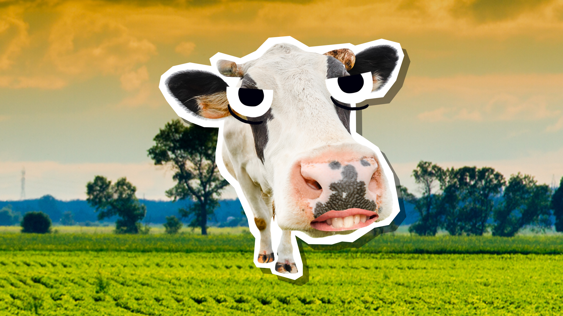 A smiling cow