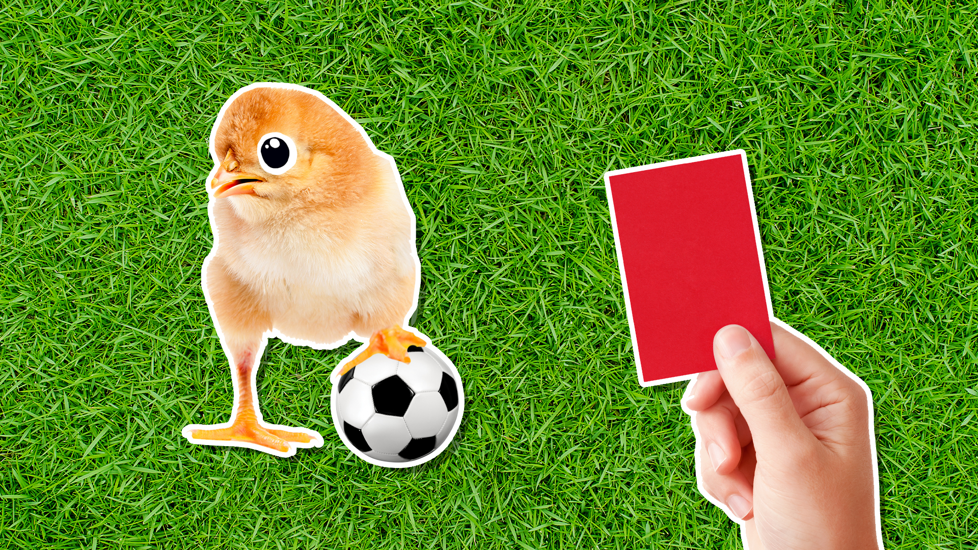 A chicken playing football