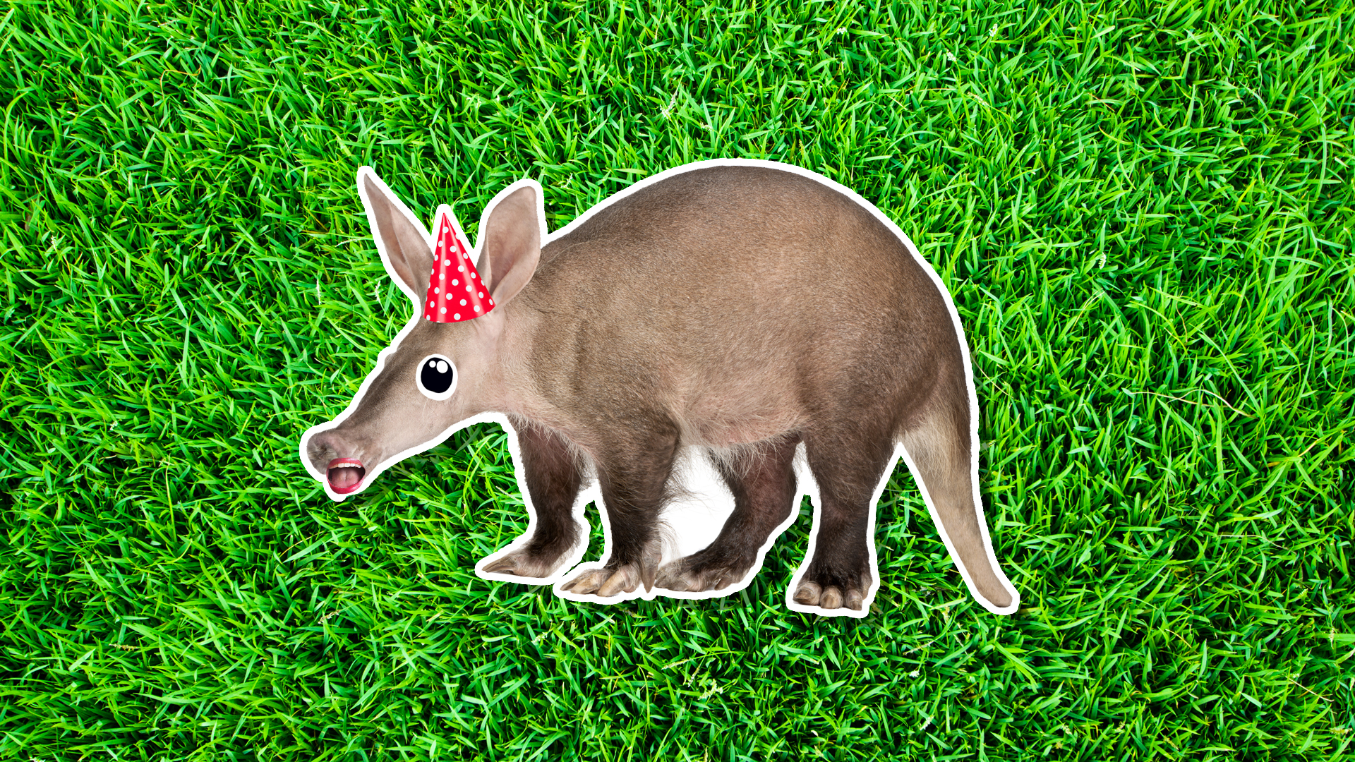 An aardvark in a party hat