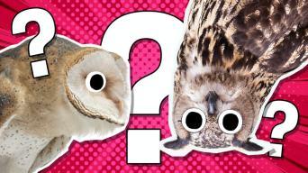 Owl jokes