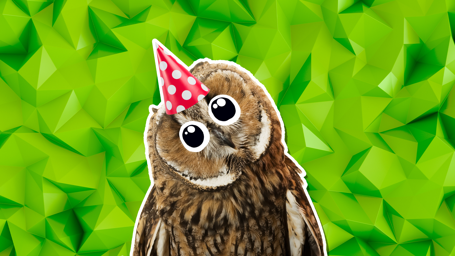 An owl in a party hat