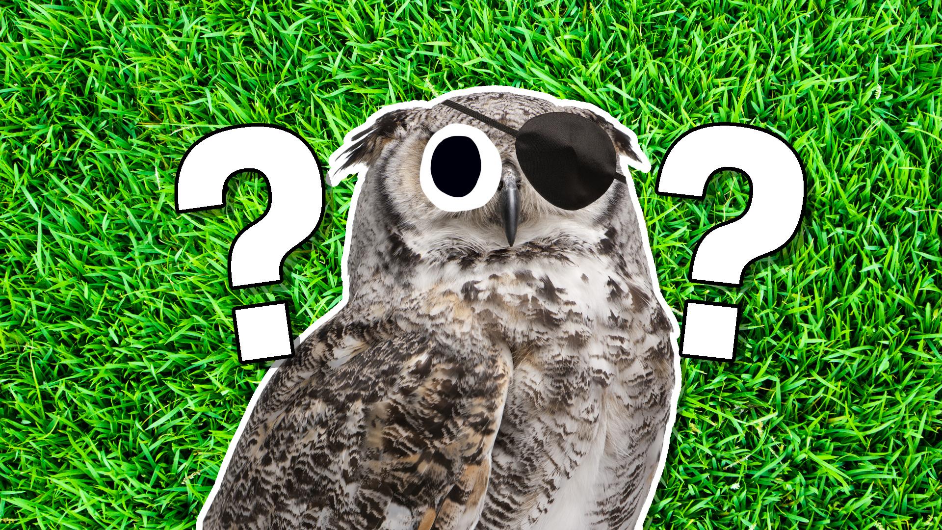 An owl wearing an eyepatch