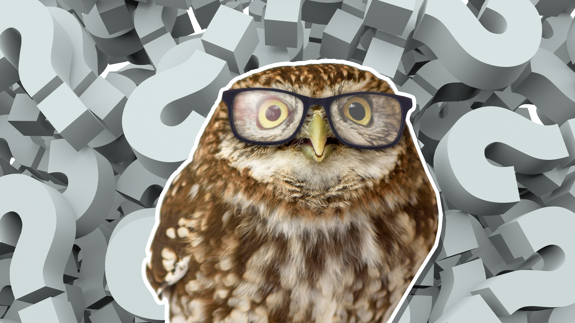 A clever owl