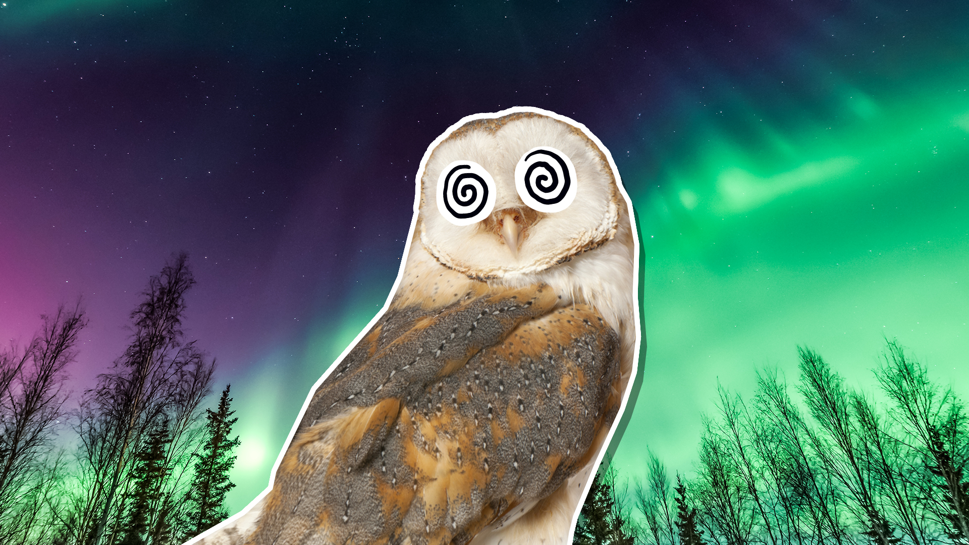 An owl against the Northern Lights