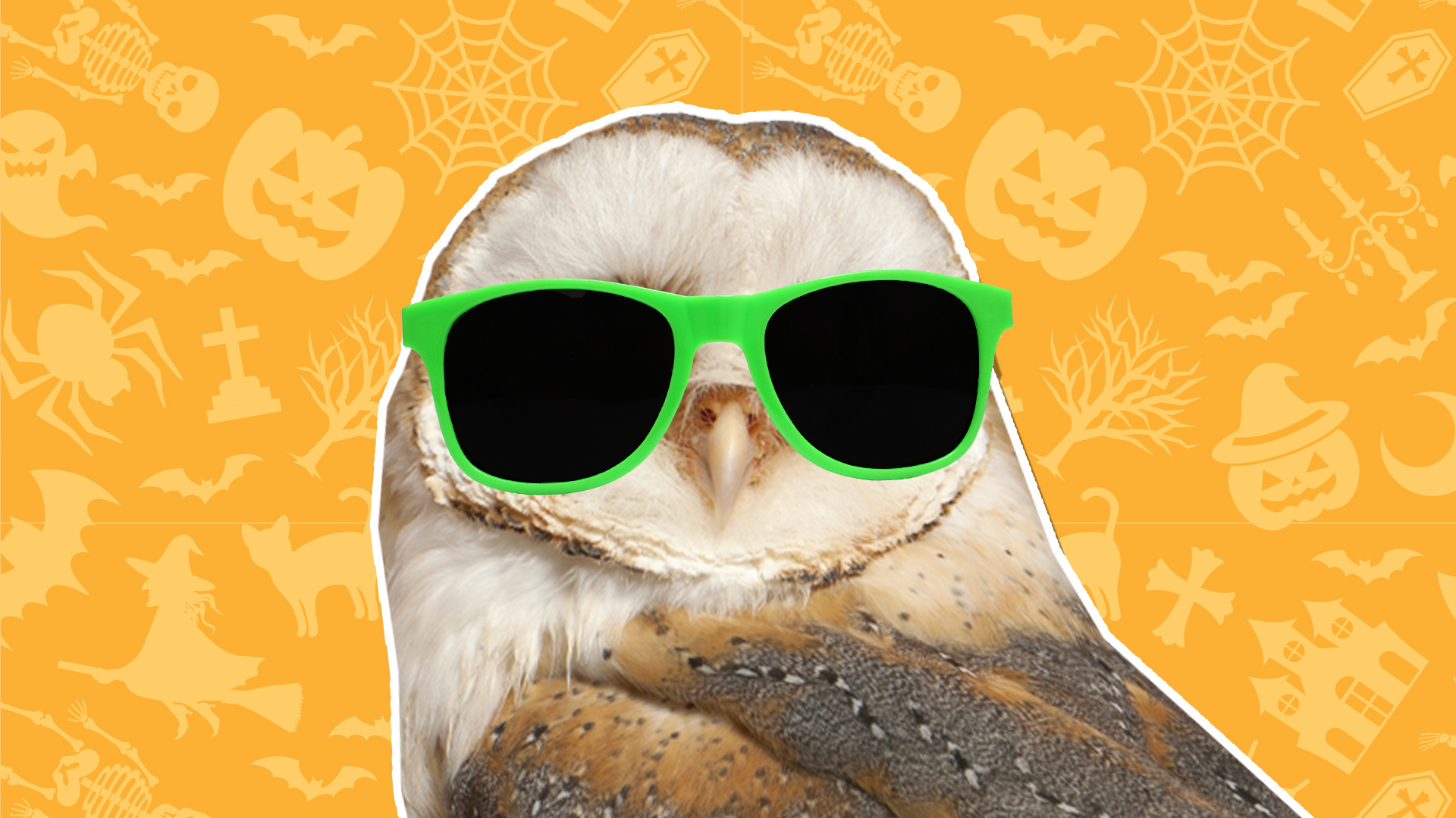 A brown owl wearing green sunglasses