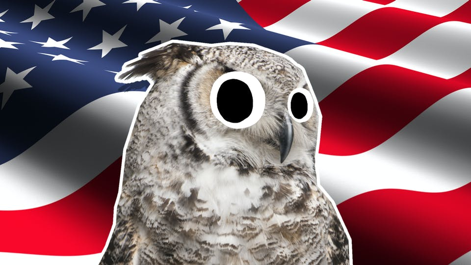An owl in front of the USA flag