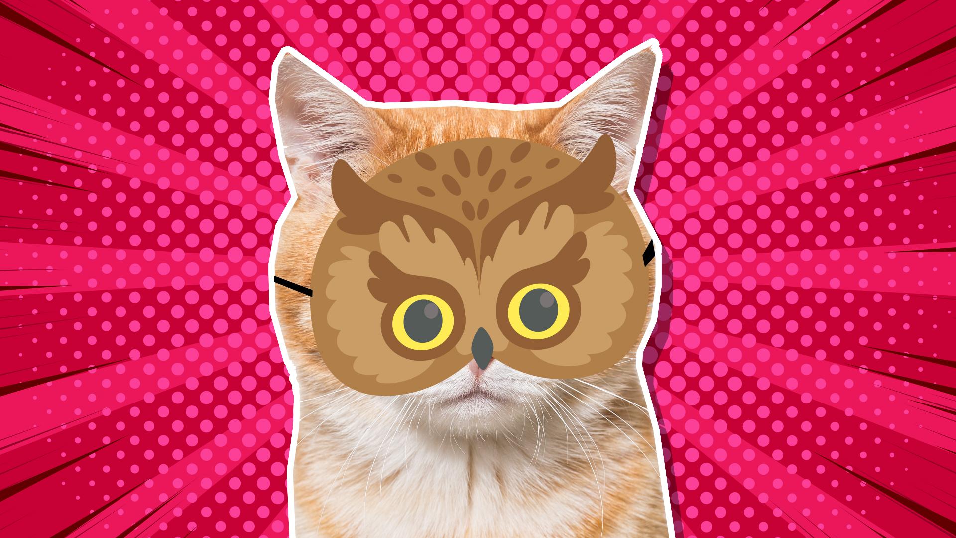 Cat in owl mask
