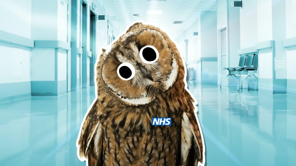 An owl doctor, if there was such a thing