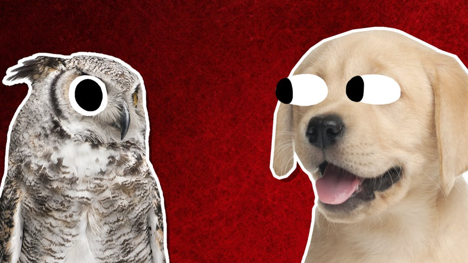 An owl and a dog